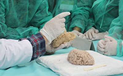 Curso de Neuroanatomía clinicoquirúrgica para enfermería
